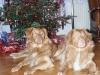 Vánoce 2004